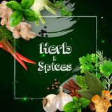 Spices and herbs on the green background royalty free illustration