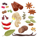 Spices and herbs icons set illustration Royalty Free Stock Photo