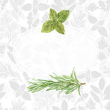 Spices and herbs. Illustration with place for text and watercolo Royalty Free Stock Images
