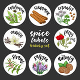 Spices and herbs labels. Colored vector bakery set Stock Image