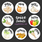 Spices herbs labels. Colored vector vegetables set Stock Photography