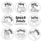 Spices herbs labels. Contour vector vegetables set Royalty Free Stock Photography