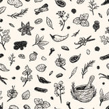Spices & Herbs, Pattern. Pattern with hand drawn  spices and herbs. Medicinal, cosmetic, culinary plants. Seeds, branches, flowers and leaves. Different Stock Images