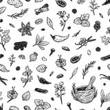 Spices & Herbs, Pattern. Pattern with hand drawn  spices and herbs. Medicinal, cosmetic, culinary plants. Seeds, branches, flowers and leaves. Different Royalty Free Stock Photo