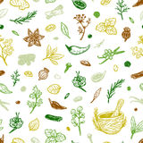 Spices & Herbs, Pattern. Pattern with hand drawn vector spices and herbs. Medicinal, cosmetic, culinary plants. Seeds, branches, flowers and leaves Royalty Free Stock Photos