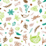 Spices & Herbs, Pattern. Pattern with hand drawn vector spices and herbs. Medicinal, cosmetic, culinary plants. Seeds, branches, flowers and leaves Stock Images