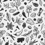 Spices & Herbs, Pattern. Pattern with hand drawn vector spices and herbs. Medicinal, cosmetic, culinary plants. Seeds, branches, flowers and leaves Royalty Free Stock Images