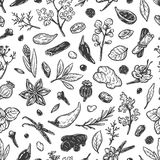 Spices & Herbs, Pattern. Pattern with hand drawn vector spices and herbs. Medicinal, cosmetic, culinary plants. Seeds, branches, flowers and leaves Royalty Free Stock Image