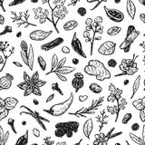 Spices & Herbs, Pattern. Royalty Free Stock Photos