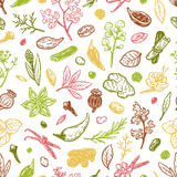 Spices & Herbs, Pattern. Pattern with hand drawn vector spices and herbs. Medicinal, cosmetic, culinary plants. Seeds, branches, flowers and leaves Royalty Free Stock Photo