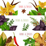 Spices and herbs vector banners set. Seasonings spicy herbs or herbal spices condiments. Rosemary and thyme, sage bay leaf, anise and oregano, basil, dill and Stock Photo