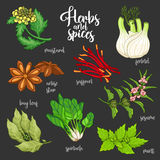 Spices and herbs vector set. Colored on dark Stock Photography