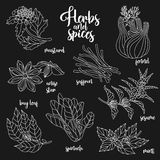 Spices and herbs vector set. Contour on dark Royalty Free Stock Photo