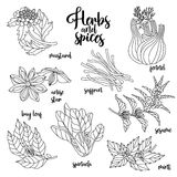 Spices and herbs vector set. Contour on white Royalty Free Stock Photos