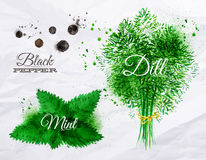 Spices herbs watercolor black pepper, mint, dill. Spices herbs set drawn watercolor blots and stains with a spray black pepper, mint, dill Stock Photos