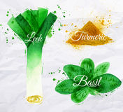Spices herbs watercolor leeks, basil, turmeric. Spices herbs set drawn watercolor blots and stains with a spray leeks, basil, turmeric Royalty Free Stock Images