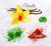 Spices herbs watercolor vanilla, rosemary, paprika Royalty Free Stock Images