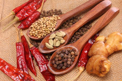 Spices and herbs in wooden spoons. Royalty Free Stock Image