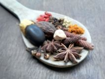 Spices herbs with woodspoon Royalty Free Stock Photo