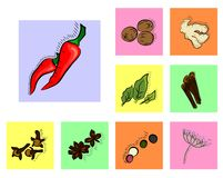 Spices icons Royalty Free Stock Image