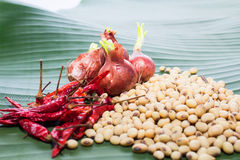 Spices include pepper  shallots  soy beans  corn Royalty Free Stock Image