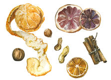 Spices with mandarin and orange. Watercolor illustration Royalty Free Stock Images
