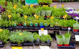 Herbs on market stall. Spices on a market stall in spring stock image
