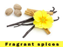 Spices with primrose flower Royalty Free Stock Photos