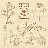 Spices in Russia. A collection of distinctive Stock Photos