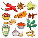 Spices seasoning hand drawn style food herbs elements and seeds ingredient cuisine flower buds leaves food plants Royalty Free Stock Photos