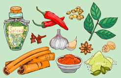 Spices seasoning hand drawn style food herbs elements and seeds ingredient cuisine flower buds leaves food plants Royalty Free Stock Photo