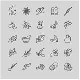 Spices and seasonings line icons Royalty Free Stock Photo