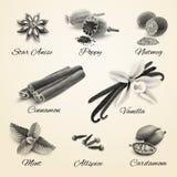 Spices set black and white Stock Photos