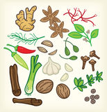 Spices set with ginger  and cliparts Royalty Free Stock Photo