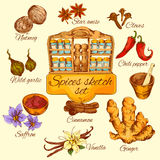 Spices Sketch Colored Royalty Free Stock Image