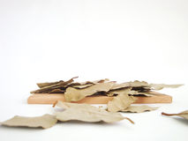The spices - thyme, cumin and garlic. Allspice, pimento Royalty Free Stock Image