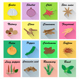 Spices vector set Royalty Free Stock Images