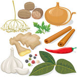 Spices and vegetables for cooking. On white background Stock Images