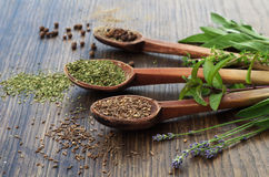 Spices on wooden spoons, fresh organic herbs on wooden background Royalty Free Stock Photos
