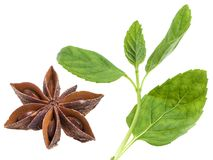 Spicy aroma couple. Anise star with mint leaves on white background royalty free stock photos