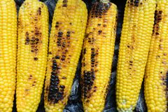 Free Spicy Buttered Corn On The Cob Stock Images - 125425754