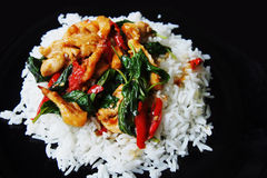 Spicy chicken basil with rice Royalty Free Stock Images