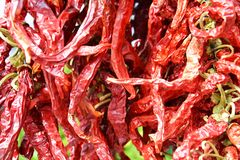 Spicy chilli pepper Stock Image
