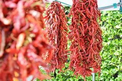 Spicy chilli pepper groups at the market royalty free stock photo