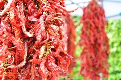 Spicy chilli pepper at the market stock photography