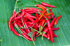 Spicy chilli peppers Stock Photo