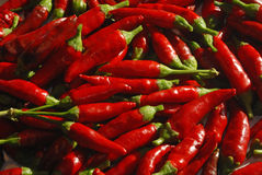 Spicy chillies Royalty Free Stock Photo