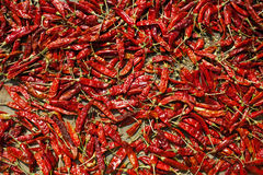 Spicy chillies pepper Royalty Free Stock Images