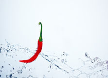 Spicy chilly underwater Royalty Free Stock Image