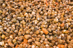 Spicy Clams on Market Stall, Cambodia Stock Images